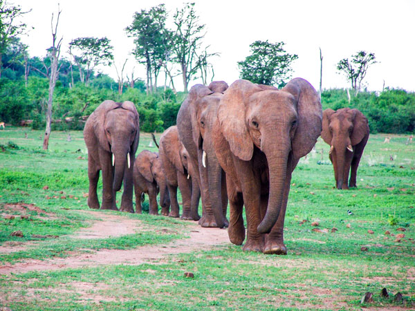 family of elephants in zimbabwe africa for the bumi hills foundation