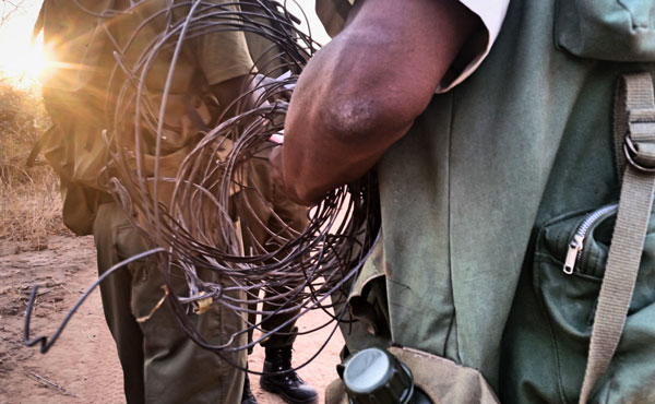 Deadly Snares Found on Patrol in Zimbabwe Africa by Anti Poaching Unit Rangers
