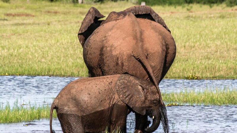 zimbabwe committed to conservation