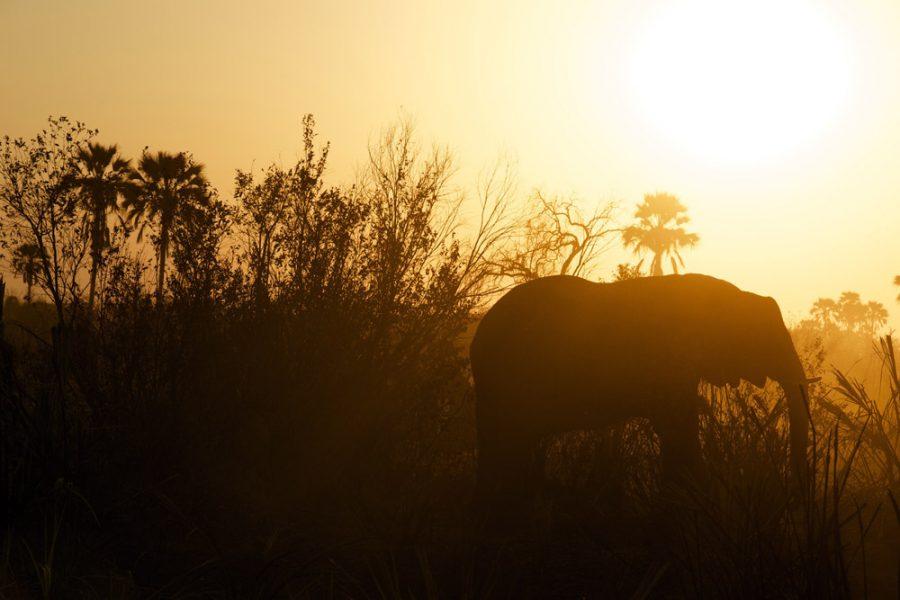 elephants bumi hills