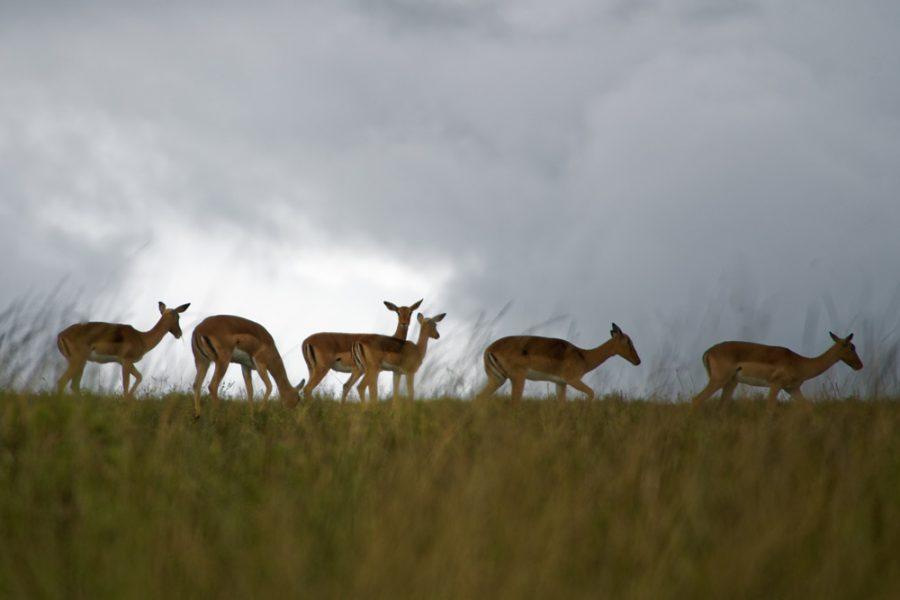 wildlife course